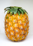 Pineapple with small leaves on top on white background. Stock Photo