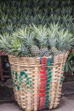The Pineapple sold in the market. Stock Photography