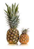 Pineapple. Still life single pineapple close up, on white background, isolated royalty free stock images