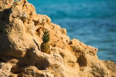 Pineapple on stone in sea water. summer vacation and travel concept. vitamin and dieting with fresh fruit. healthy stock images