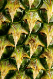 Pineapple texture Royalty Free Stock Image