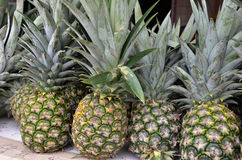 Pineapple tropical fruit. On the market for sale Stock Image