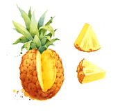 Pineapple Tropical Fruit Slices Watercolor Illustration Hand Painted Stock Images