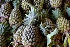 Pineapple. The pineapple is a tropical plant with an edible multiple fruit consisting of coalesced berries, also called pineapples, and the most economically stock photography