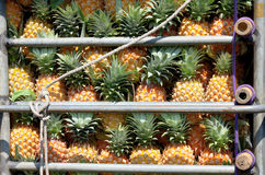 Pineapple in truck Stock Photography