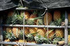 Pineapple in truck Royalty Free Stock Images