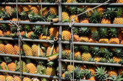 Pineapple in truck Royalty Free Stock Photos