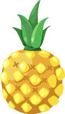 Pineapple vector. Pineapple isolated illustration on white background vector Royalty Free Stock Image