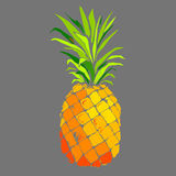 Pineapple vector fruit, food tropical summer design illustration background sweet Stock Photography