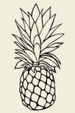 Pineapple vector Illustration Stock Photography