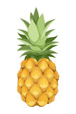 Pineapple. Vector illustration. Royalty Free Stock Photography