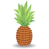 Pineapple Vector Royalty Free Stock Images