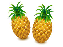 Pineapple vector, pineapple , pineapple Stock Images