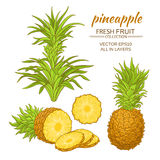 Pineapple vector set. Pineapple fruit vector set on white background stock illustration