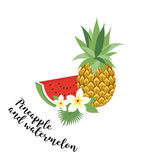 Pineapple and watermelon - , illustration. Fruit set. Icons tropical fruits with leaves and flowers. Set of  trendy il Stock Image