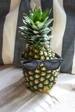 Pineapple wearing sunglasses laying under sunlight royalty free stock images