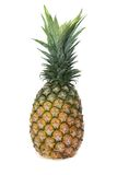 Pineapple in white background Stock Photos