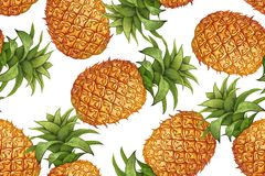 Botanical seamless pattern with pineapple. Royalty Free Stock Images