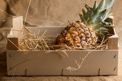 Pineapple in wooden box Royalty Free Stock Images