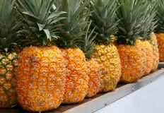 Pineapples. A group of pineapples in a row Royalty Free Stock Photography