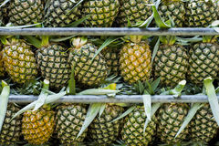 Pineapples. On a pick up truck, ready for the delivery Royalty Free Stock Images