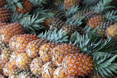 Pineapples. Market stall offering fine ripe pineapples Stock Photos