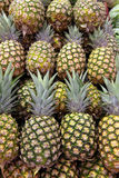 Pineapples Royalty Free Stock Photography