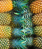 Pineapples. Stock Image