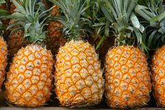 Pineapples. The background of ripe pineapples Royalty Free Stock Photography