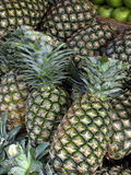 Pineapples Royalty Free Stock Photos