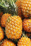 Pineapples. The close-up of ripe pineapples Stock Photos