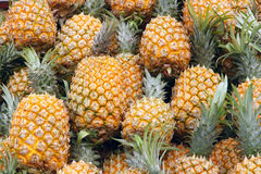 Pineapples Stock Images