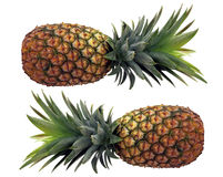 Pineapples. Two pineapples isolated against white background Royalty Free Stock Photos