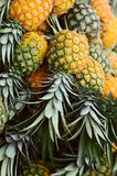 Pineapples. An outdoor fruit market, pineapples Royalty Free Stock Images