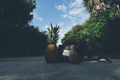 Pineapples Beside Backpack Stock Photos
