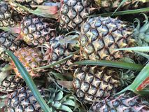 Pineapples. A close up shot of pineapples taken at a local market in Benut, Johor Royalty Free Stock Images