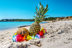 Pineapples and coconuts by the shore Royalty Free Stock Images