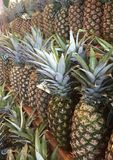 Pineapples for days. Rows of beautiful pineapples lined up for sale stock photography