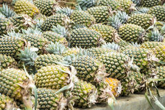 Pineapples Royalty Free Stock Images