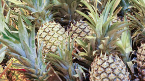 Pineapples fruits with selective focus and shallow depth of field. Royalty Free Stock Photos
