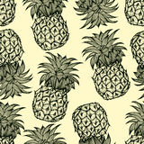 Pineapples hand drawn sketch Stock Photos