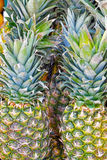 Pineapples on a market Royalty Free Stock Images
