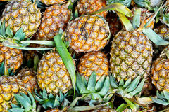 Pineapples. A pile of fresh pineapples stock photo