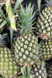 Pineapples Royalty Free Stock Photo