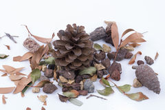 Pineapples. Pine cones on a white background royalty free stock photos