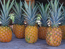 Pineapples at a Roadside Market in Hawaii. Whole pineapples standing on a table in a roadside market in Hawaii Stock Photos
