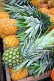 Pineapples for sale Royalty Free Stock Image