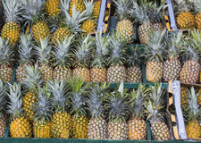 Pineapples for Sale. A display of tasty pineapples for sale Stock Image