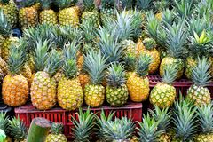 Pineapples for sale in Market in Santander, Colombia stock photo