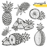 Pineapples set Royalty Free Stock Image